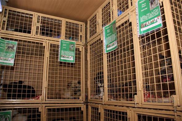 Передвижной фургон для раздачи бездомных животных ездит по Петербургу. Изображение № 5.