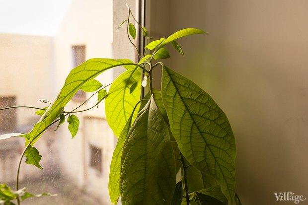 Где посадки: Что горожане выращивают на балконах иподоконниках. Изображение № 24.