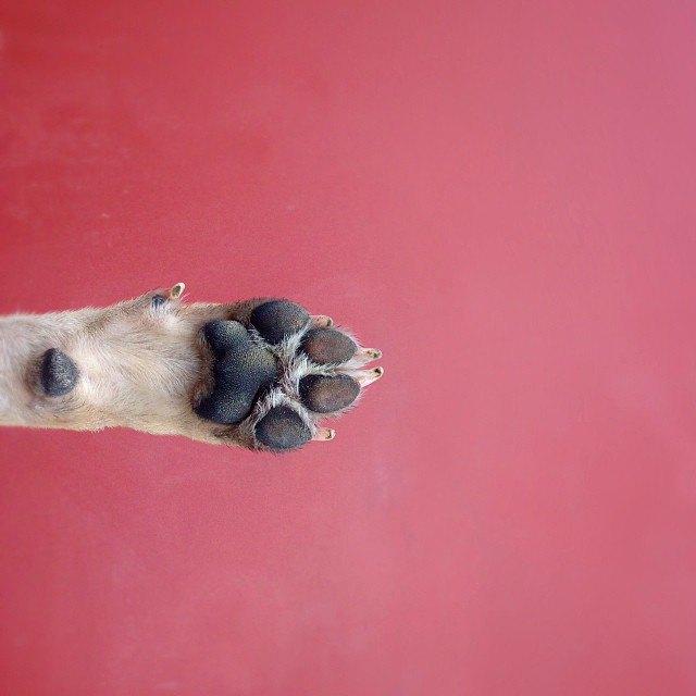 Лучшие страницы Instagram с животными: Часть 1. Изображение № 13.