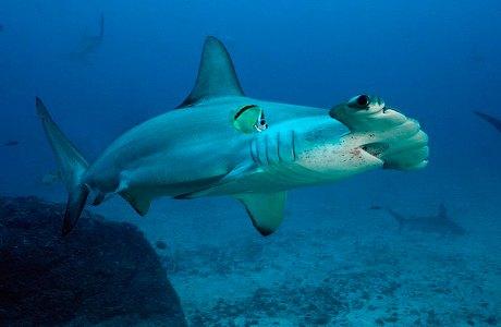 В Ocean Plaza привезли новую акулу. Зображення № 1.