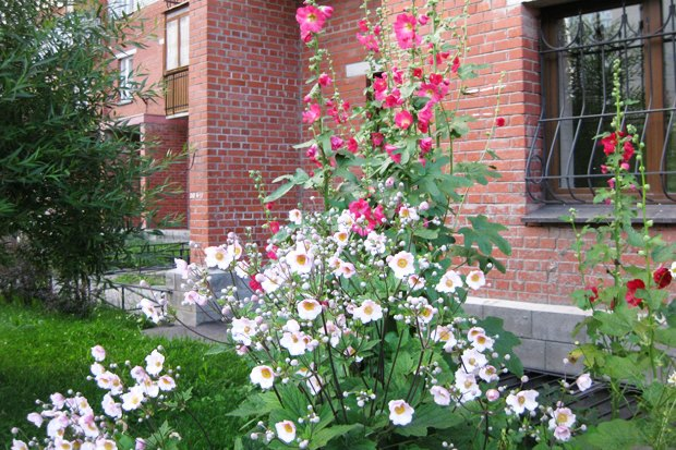 Личный опыт: Как разбить сад под окнами. Изображение № 1.