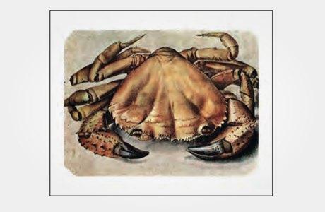 Набор с рисунками Дюрера. Изображение № 5.
