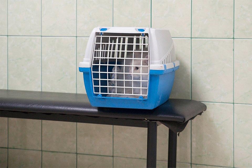 Всё не как улюдей: Какработает ветеринарная неотложка. Изображение № 13.