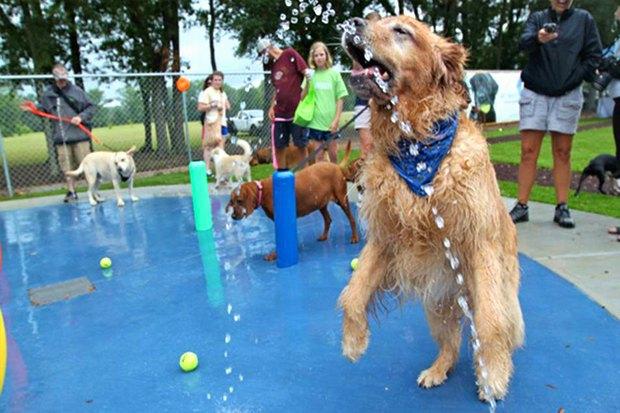 Иностранный опыт: Как устроены площадки для выгула собак в 5 городах мира. Изображение № 21.