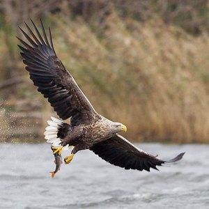 Столичная фауна: Кто живёт в киевских прудах и парках . Изображение № 7.