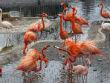 Московский зоопарк предложили перенести в Измайлово. Изображение № 2.