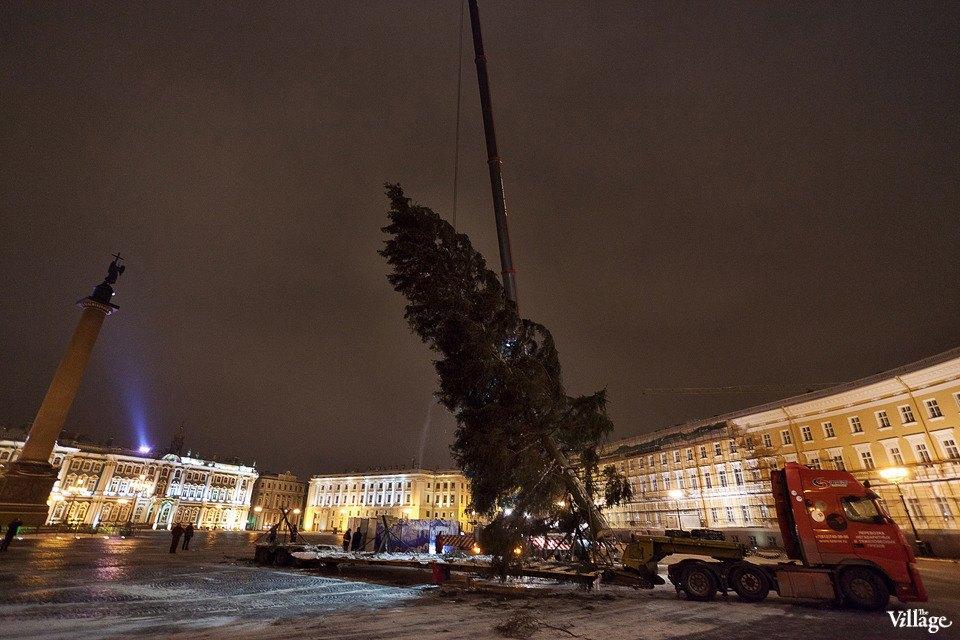 Фоторепортаж: Как устанавливали главную петербургскую ёлку. Изображение № 31.