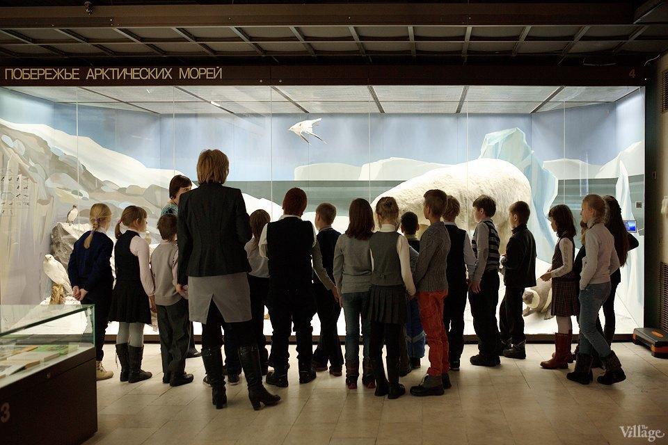 Перемены в Дарвиновском музее: «Можно бегать, прыгать и шуметь». Изображение № 8.