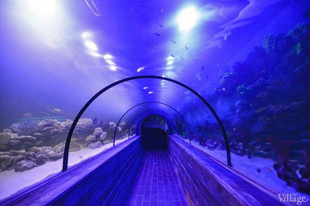 В «Детском мире» начал работать океанариум. Изображение № 4.