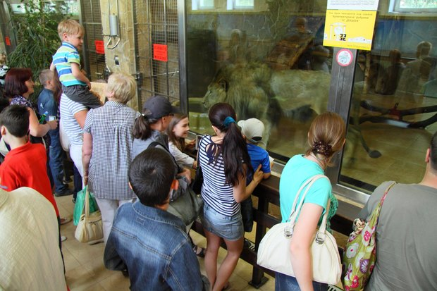 В Ленинградском зоопарке клетки заменяют стеклянными вольерами. Изображение № 1.