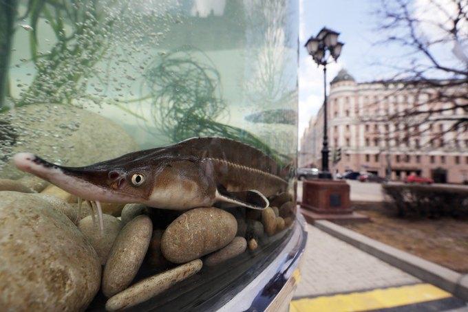 Двухметровый аквариум вНовопушкинском сквере. Изображение № 3.