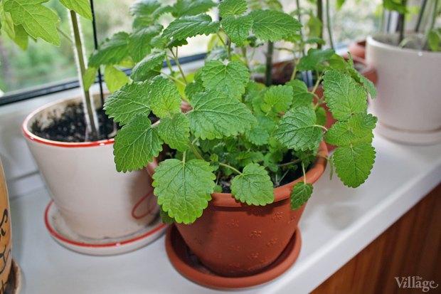Сделай сад: Что киевляне выращивают у себя на балконах. Зображення № 17.