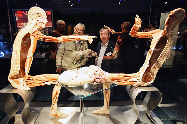 Спустили шкуру: В Киев привезут The Human Body Exhibition. Зображення № 9.