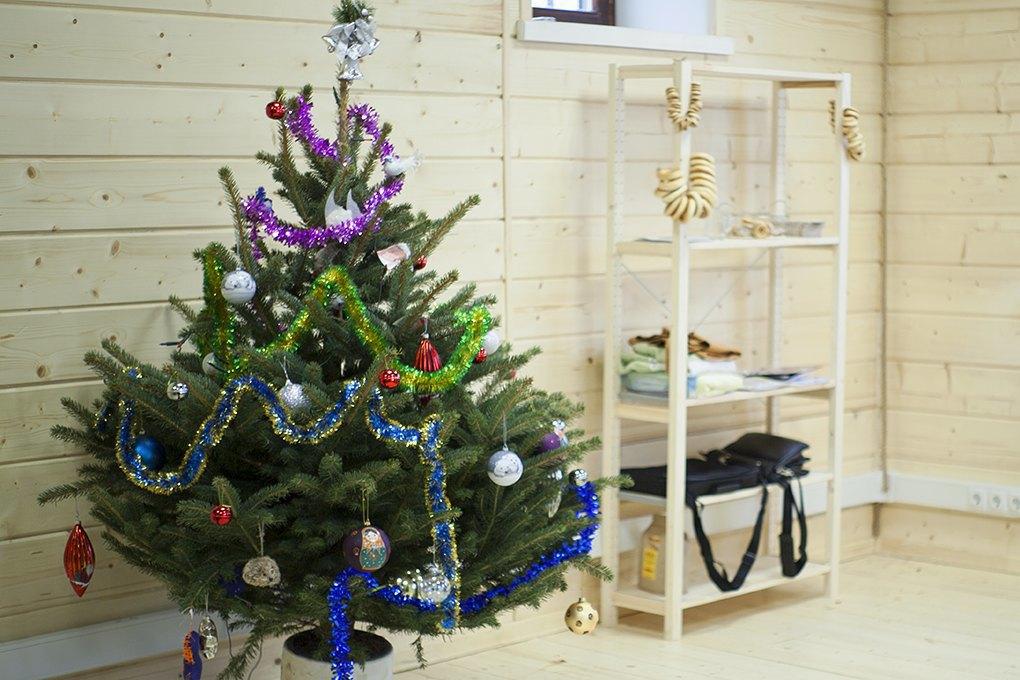 Бизнес на «ЭкоЁлках»: Встретить Новый год, несрубив дерева. Изображение № 4.