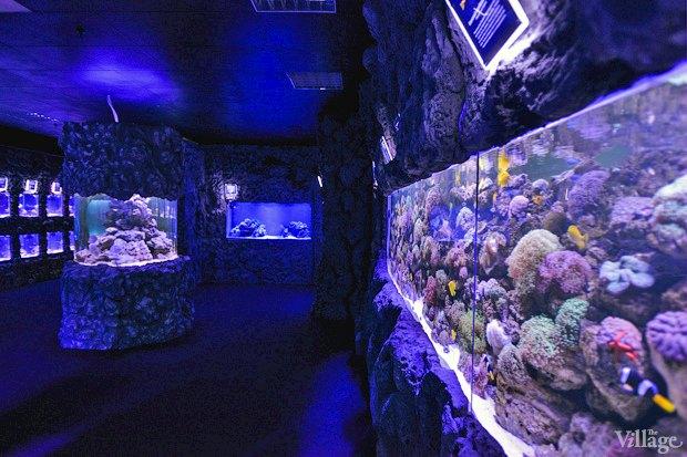 В «Детском мире» начал работать океанариум. Изображение № 8.