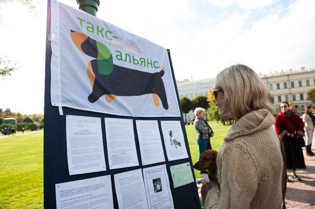 «Пустой поводок»: Как владельцы собак борются сэпидемией отравлений . Изображение № 7.