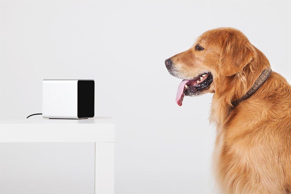 Petcube: Гаджет для общения с животными на расстоянии. Изображение № 7.