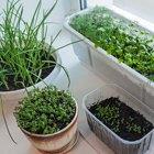 Сделай сад: Что киевляне выращивают у себя на балконах. Зображення № 48.