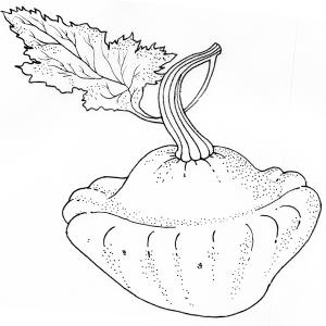 Сезон молодых овощей: Патиссон. Изображение № 1.