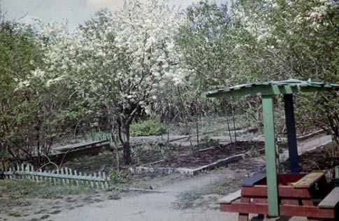 Сад Травникова в 60-е годы. Изображение № 2.