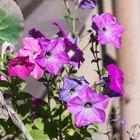 Где посадки: Что горожане выращивают на балконах иподоконниках. Изображение №48.