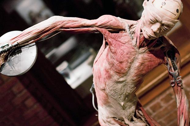 Спустили шкуру: В Киев привезут The Human Body Exhibition. Зображення № 6.