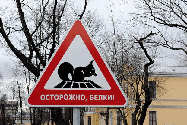 Знак «Осторожно: белки!» перед бизнес центром «Бенуа» на Свердловской набережной. Изображение № 2.