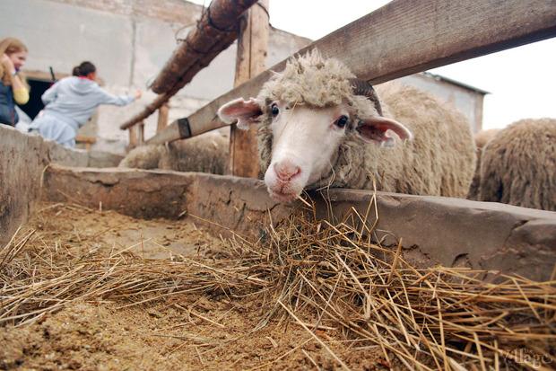 Новое место (Киев): Ресторан «Охота на овец». Изображение № 5.