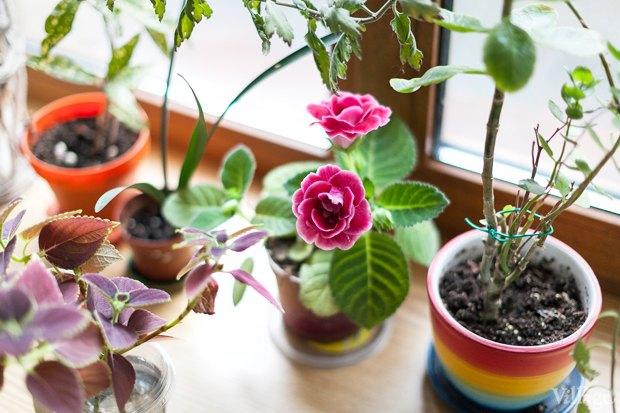 Где посадки: Что горожане выращивают на балконах иподоконниках. Изображение № 65.