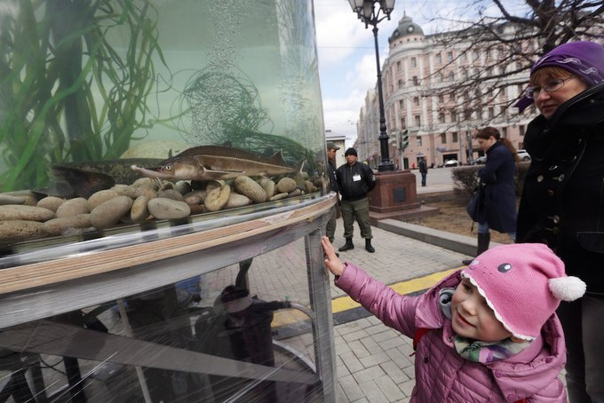 Двухметровый аквариум вНовопушкинском сквере. Изображение № 4.