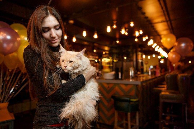 10 мест, куда пускают с домашними животными в Москве. Изображение № 1.