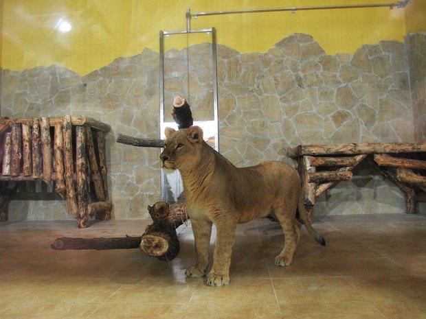 В Ленинградском зоопарке клетки заменяют стеклянными вольерами. Изображение № 5.