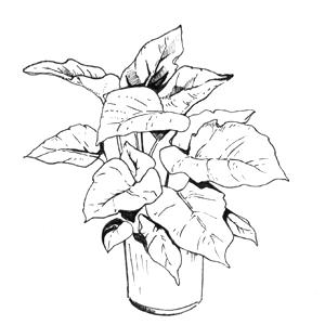 Гид The Village: Комнатные растения. Изображение № 41.
