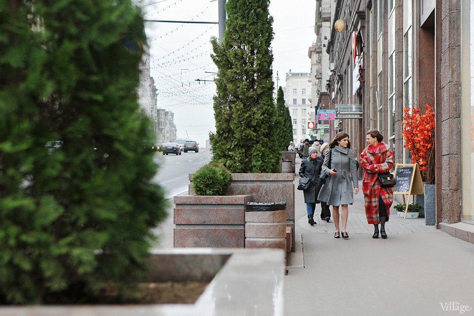 Фото дня: Туи и можжевельник наТверской улице. Изображение № 1.