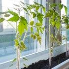 Сделай сад: Что киевляне выращивают у себя на балконах. Зображення № 37.