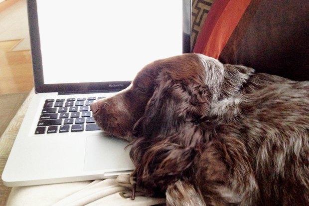 Личный опыт: Что делать, если вы нашли собаку. Изображение № 7.