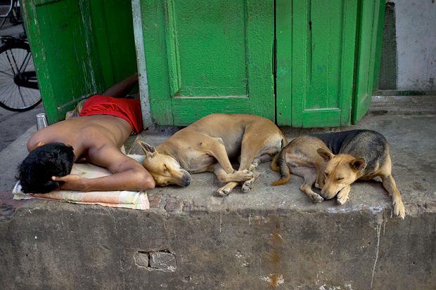 Иностранный опыт: Что делать сбездомными собаками. Изображение № 2.