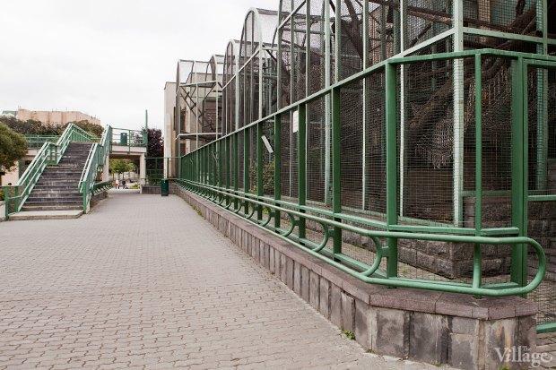 Директор московского зоопарка: «Погода была ужасной, всё выглядело очень грустно». Изображение № 12.