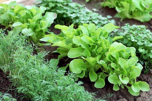 5простых советов для тех, кто хочет заняться огородничеством набалконе. Изображение № 3.