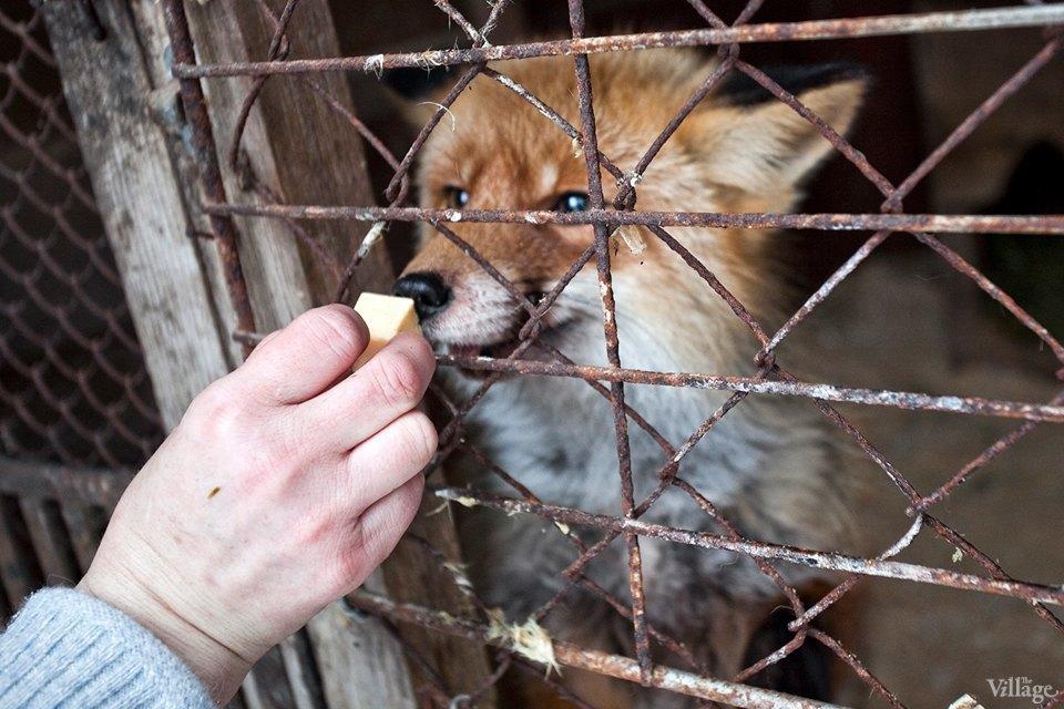 Люди в городе: Волонтёры вприюте длядиких животных. Изображение № 4.