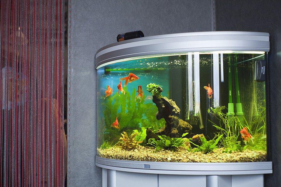 Это рыбы.. Изображение № 12.