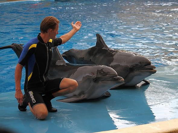 В парке «Фили» можно будет поплавать с дельфинами. Изображение № 1.