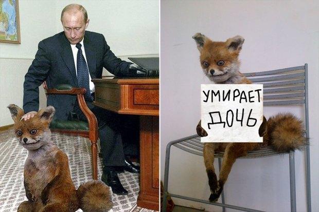 Упоротого лиса выставят в Петербурге. Изображение № 4.