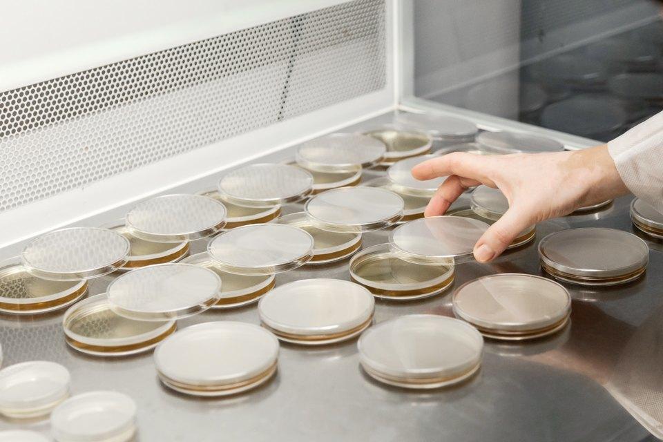 Микробиолог Андрей Шестаков— ополезных микробах, вреде молока ифинансировании науки. Изображение № 9.