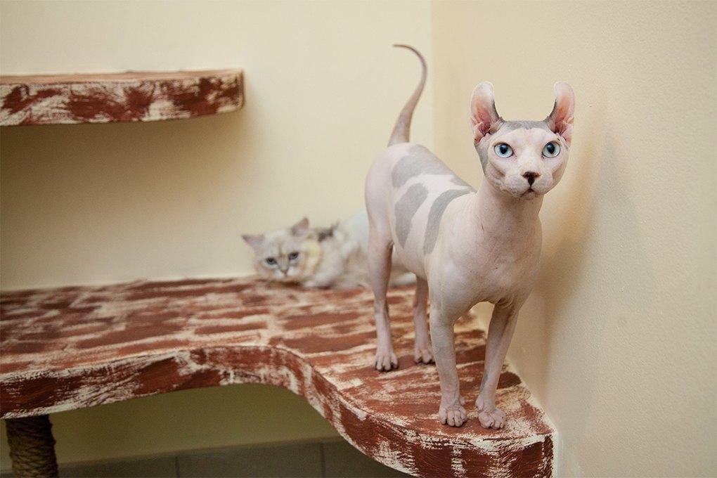 «Мурмулет»: Как заработать на котятах за полмиллиона рублей. Изображение № 11.