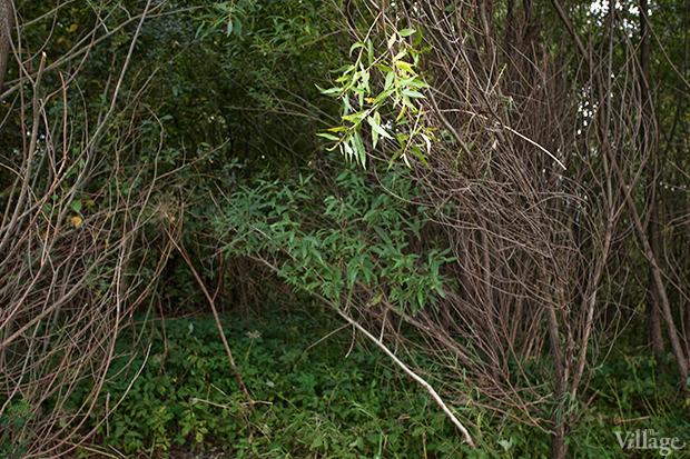 Дом на дереве: Жители Лахты за месяц до строительства небоскреба. Изображение № 25.
