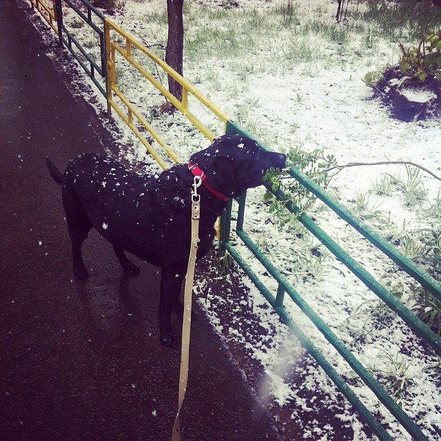 Майский снегопад вснимках Instagram. Изображение № 7.