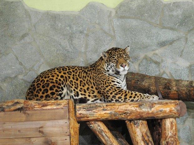 В Ленинградском зоопарке клетки заменяют стеклянными вольерами. Изображение № 3.