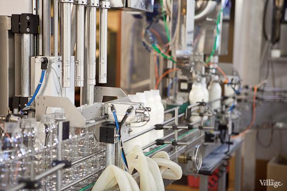 Репортаж: Как делают молочные продукты в «Лосево». Изображение № 37.