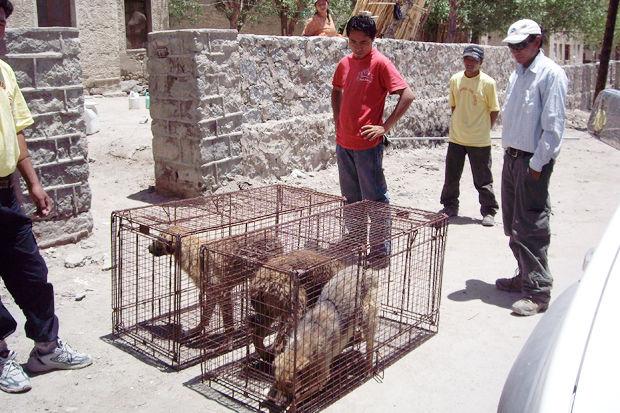 Иностранный опыт: Что делать сбездомными собаками. Изображение № 6.